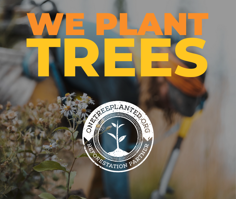 Graphic: CCC plants trees for sustainability
