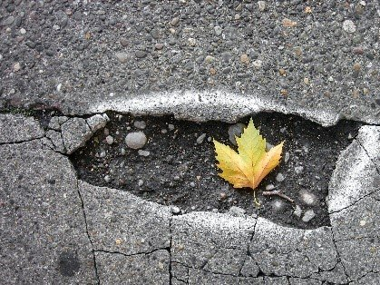 Concrete 101: How do you know when it's time to replace your driveway?